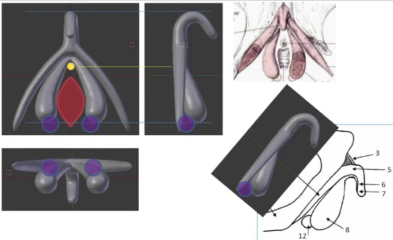 the3dzone-clitoris